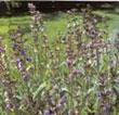 phyto-aromatherapie